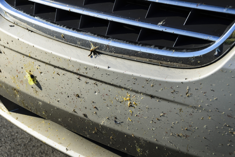 bug removal services, insects, dead bugs, bug splatter, bugs stuck on cars, dirty car, insect removal