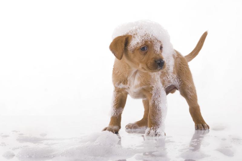 pet wash, dog wash, multi-profit center, dog grooming, self-serve