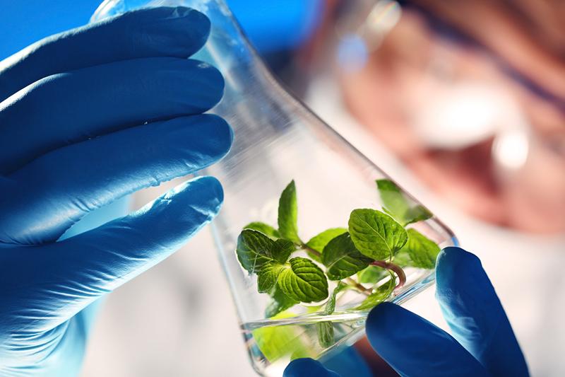biobased chemistry, biobased, chemistry, biochemistry, plant, test tube, scientist