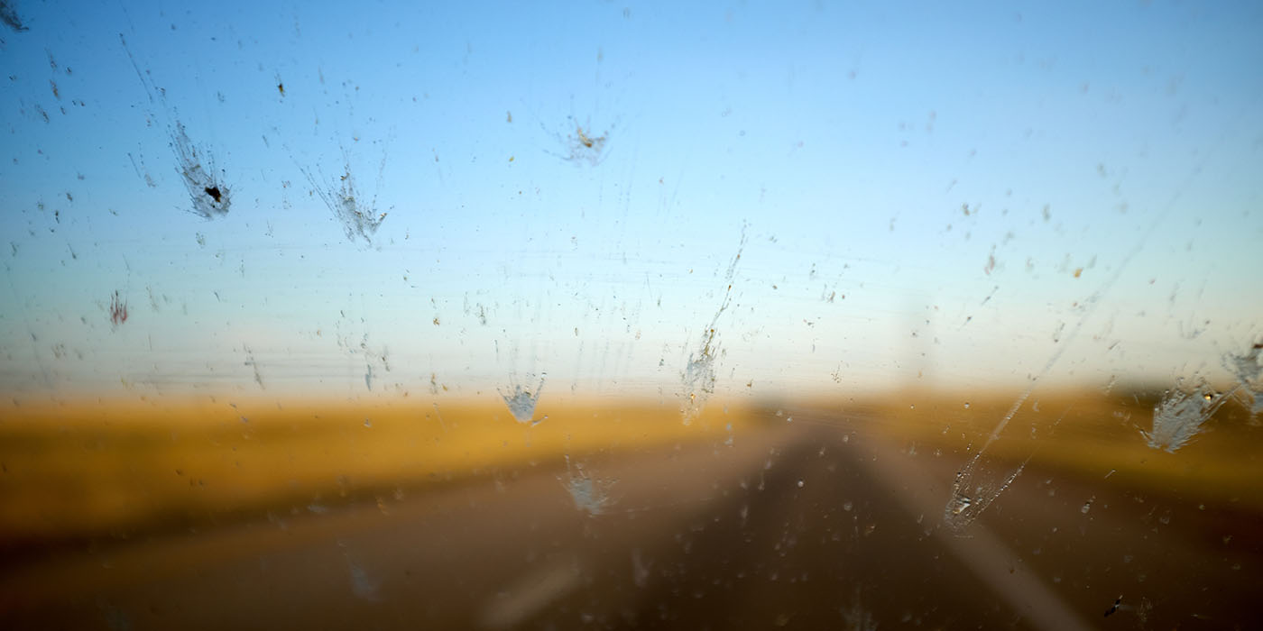 bug, bugs, insect, insects, car, windshield, bug removal, insect removal