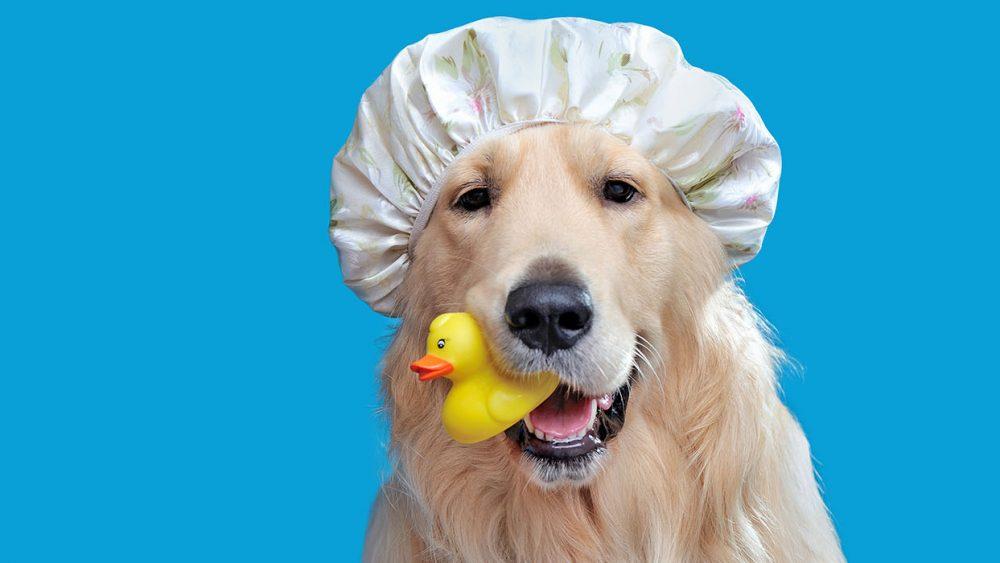 dog, pet wash